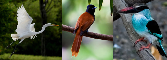 3 birds to see when birdwatching in Gambia, Egrets, Bee-eaters and Kingfishers