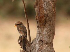 Birding in the Gambia - Various 2