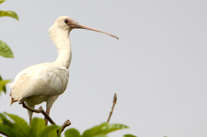 Birdwatching in Senegal and Gambia