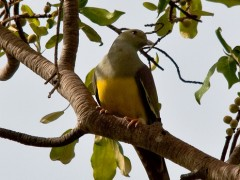 Birding in the Gambia - Various 1